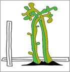 Logo-BOKU